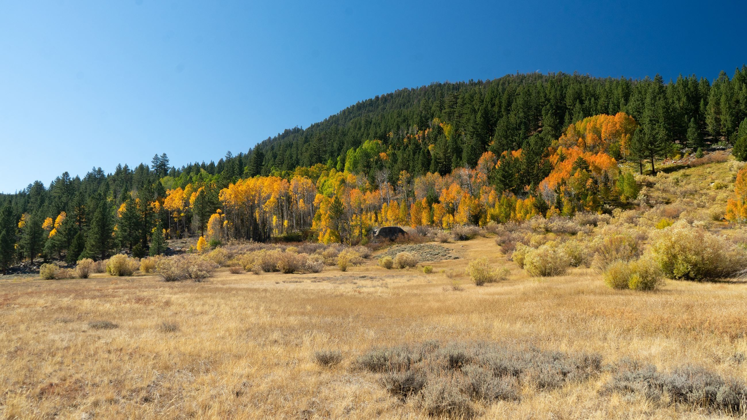 Alpine County Fall Colors 1